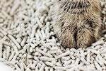 豆腐猫砂.jpg
